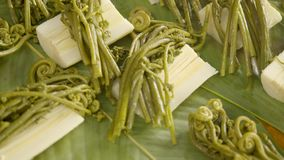 Detail Shot Of Cooked Edible Wild Fern. With Palmetto stock video