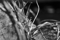 Detail shot of dry branches. In black and white Stock Photos