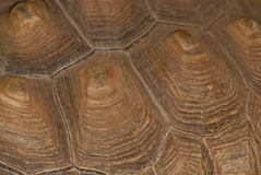 Detail shot of a turtle shell Stock Photography