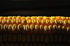 Detail shot of yellow corn Royalty Free Stock Image