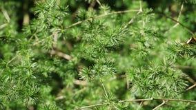 Detail of shrubs royalty free stock photos