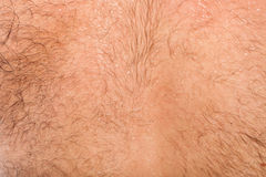 Detail of skin on male back. Close up of hairy skin on male back Royalty Free Stock Photo