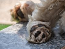 Detail of a dog`s paw stock image