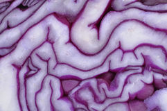 Detail of a sliced red cabbage Stock Photography