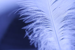 Detail of a small blue feather Stock Image