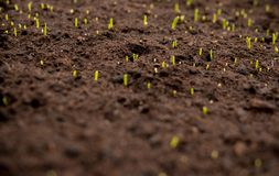 detail of small seedlings with shallow depth of field Stock Photo