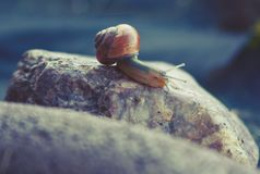Snail on stone stock images