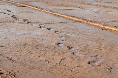 Soil mud and footprint in rice field prepare for plant rice in agriculture. Detail soil mud and footprint in rice field prepare for plant rice in agriculture Royalty Free Stock Photo