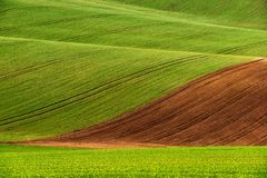 Detail of South Moravian field, Czech republic. Stock Photos