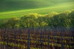 Detail of South Moravian field, Czech republic. Royalty Free Stock Image