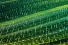 Detail of South Moravian field, Czech republic. Royalty Free Stock Photo