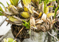 Detail of special tropical plant, gardening theme Royalty Free Stock Photo