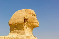 Detail of the Sphinx Giza Royalty Free Stock Photo