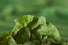 Detail of spinach Royalty Free Stock Image