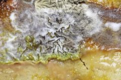 Detail of Spoiled Moldy cheese. Close up Royalty Free Stock Photo