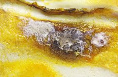 Detail of Spoiled Moldy cheese. Close up Stock Photo