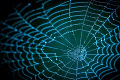 Detail of spooky cobweb on a dark night background Stock Photography