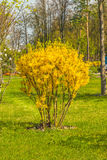 Detail of spring blossoming park. Royalty Free Stock Photo