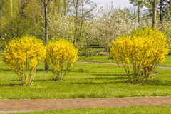 Detail of spring blossoming park. Stock Photography