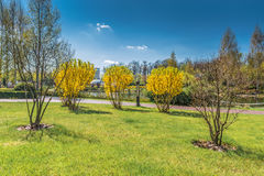 Detail of spring blossoming park. Stock Photos
