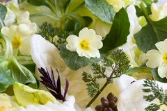 Detail of a salad with primula, nipplewort and other wild edible. Detail of a spring salad with primula flowers, young nipplewort leaves and other wild edible stock image