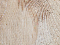Detail of the spruce tree-rings Stock Images