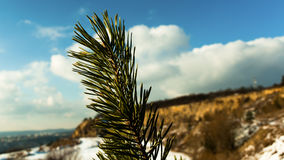 Detail of a spruce twig. With a stone quarry in the background and the city's skyline stock images