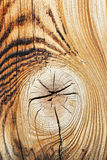 Detail of spruce wood texture Royalty Free Stock Photography
