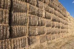 Detail stack straw Stock Image