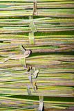 Detail of stacked up palm leaves Royalty Free Stock Images