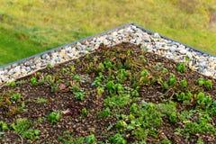 Detail of stones on extensive green living roof vegetation covered. Detail of stones on extensive green living roof covered with vegetation mostly sedum Royalty Free Stock Photo