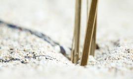 Detail am Strand lizenzfreie stockfotos