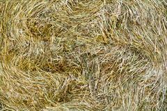 Detail of straw bale. Detail of a golden and circular straw bale Stock Photo