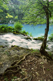 National Park Plitvice in Croatia: detail of a stream with a blue lake in the background. Detail of a stream near a tree flowing into a blue lake visible in the Stock Photo