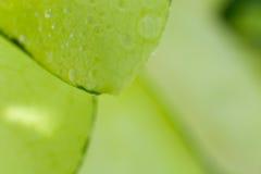 Detail of succulent plant Stock Photo