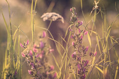 Detail from summer dreamy meadow with flowers Stock Photo