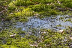 Swamp closeup. Detail of a swamp in Southern Germany at early spring time stock images