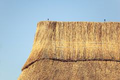 Detail of a thatched roof house using reed grass as building material. Thatched roof cottages are following a traditional, sustainable way of life royalty free stock photography