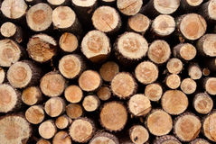 Detail of a Timber background Stock Image