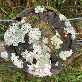 Detail top view of fence post with lichen and moss Royalty Free Stock Photography