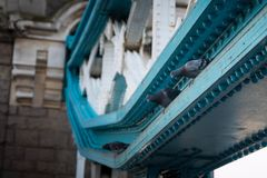 Pigeons on Tower Bridge, London. Royalty Free Stock Photos