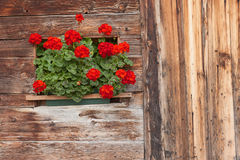 Detail of a traditional old balcony  with red geraniums from an Stock Images