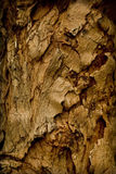 Detail of a tree. Close up of nature wood for background Stock Photo