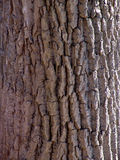 Detail of tree bark. Detail to bark on the trunk of a tree, easthampton, massachusetts Stock Images