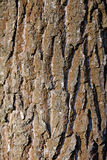 Detail of tree bark Stock Images