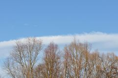 Detail of tree branches. On clear sky background Royalty Free Stock Image