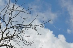 Detail of tree branches. On clear sky background Royalty Free Stock Photos