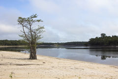 Detail of a tree and dried branches at amazon river with local v Royalty Free Stock Images