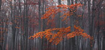 Detail of tree and red leaves in foggy forest during autumn royalty free stock image