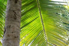 Detail. Tree trunk. Palm leaf. Royalty Free Stock Images